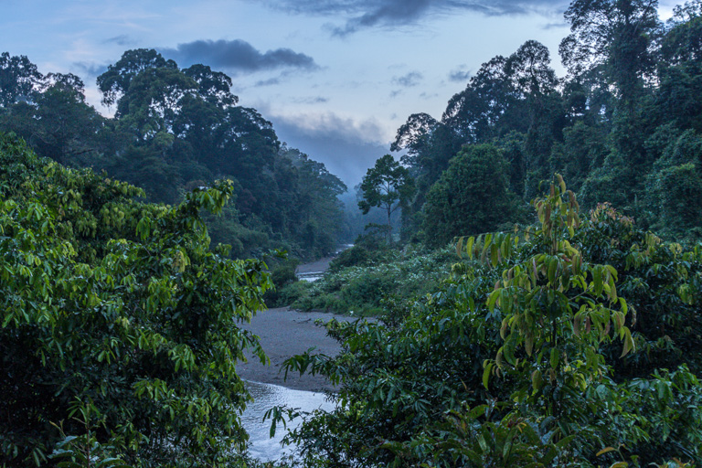 La selva tropical de Borneo malayo. Imagen de John C. Cannon/Mongabay..