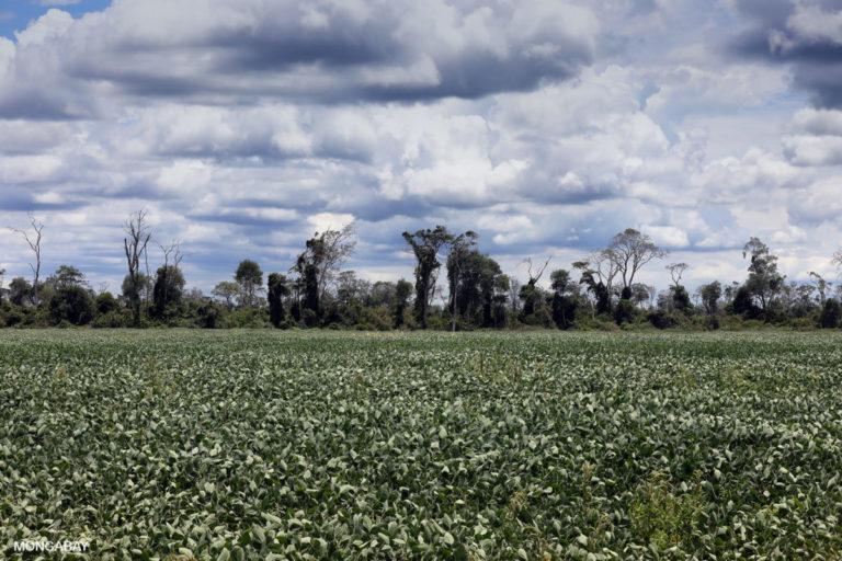 Campos de soya y bosques en Bolivia. Foto de Rhett A. Butler para Mongabay.