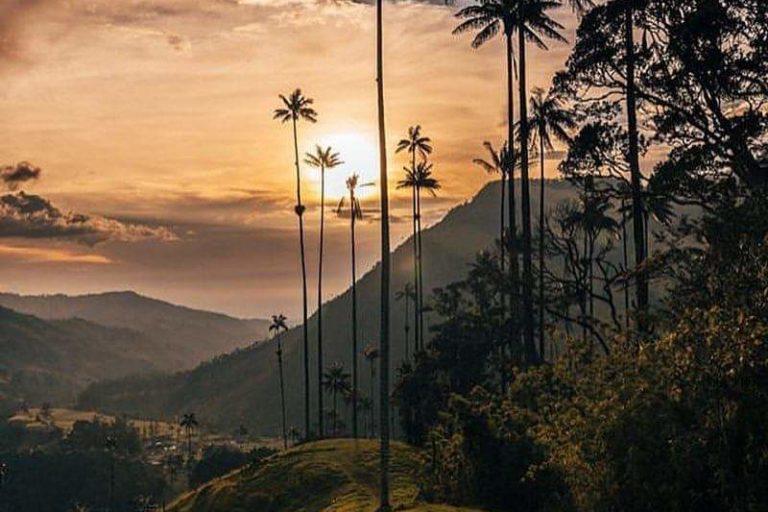 Valle de Cocora. Foto: Andrea Correa.