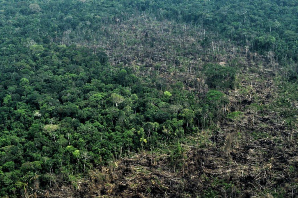 El último reporte de Monitoring of the Andean Amazon (MAAP) estima que, entre enero y mayo de 2019, la Amazonía colombiana ha perdido 56 300 hectáreas de bosque.