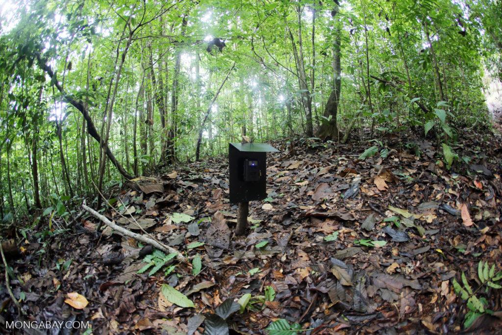 Cámara trampa en el bosque de Costa Rica.