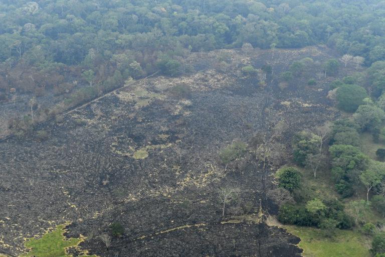 Evidencia de quema en la Amazonía colombiana. Foto: Jorge Contreras.
