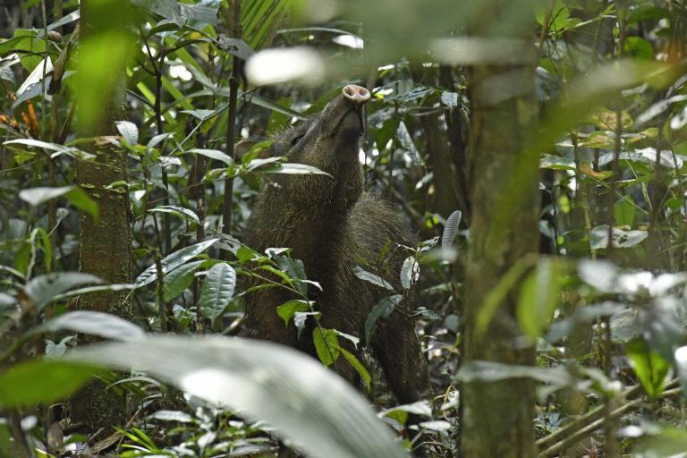 Muchas especies están en peligro debido a la fragmentación de ecosistemas que generan los incendios. Foto: Jorge Contreras.
