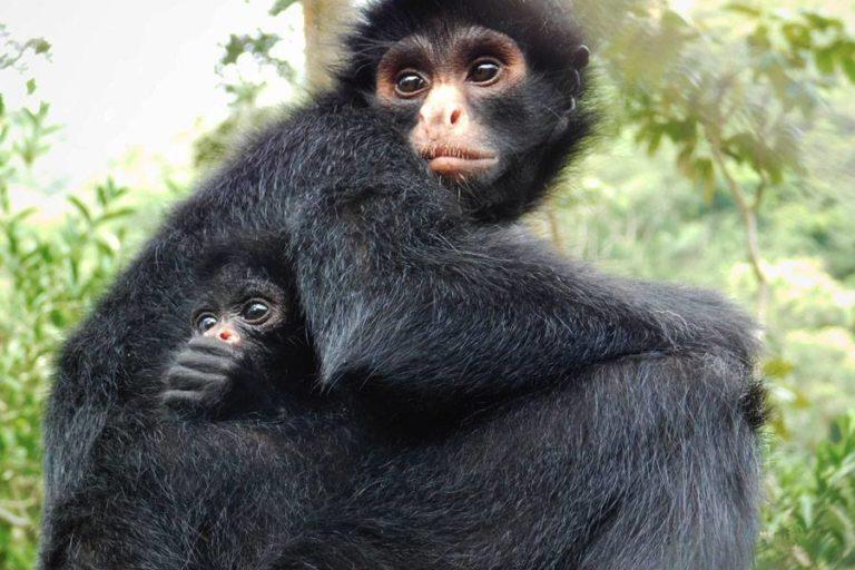Olivia y su cría Waramay que nació en el refugio en Senda Verde. Foto: Senda Verde.