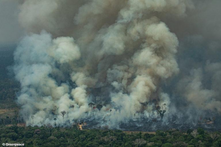 Vista aérea de una gran área quemada en la ciudad de Candeiras do Jamari en el estado de Rondonia. (Fotografía: Victor Moriyama / Greenpeace).