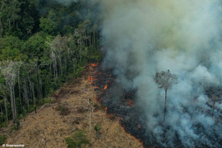 Vista aérea de áreas quemadas en la selva del Amazonas, en la ciudad de Candeiras do Jamari en el estado de Rondonia. (Fotografía: Victor Moriyama / Greenpeace).