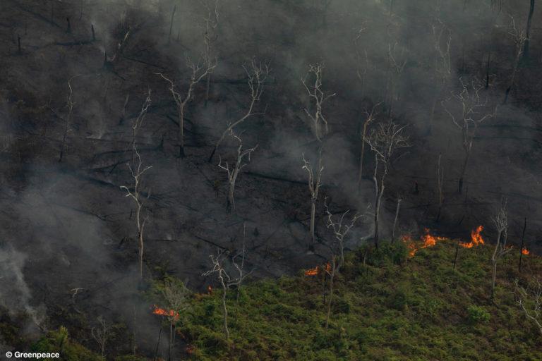 Vista aérea de áreas quemadas en la selva del Amazonas, en la ciudad de Porto Velho, en el estado de Rondonia. (Fotografía: Victor Moriyama / Greenpeace).
