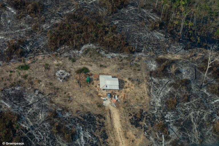 Vista aérea de áreas quemadas en la selva del Amazonas, en la ciudad de Nova Bandeirantes, en el estado de Mato Grosso (Fotografía: Victor Moriyama / Greenpeace).