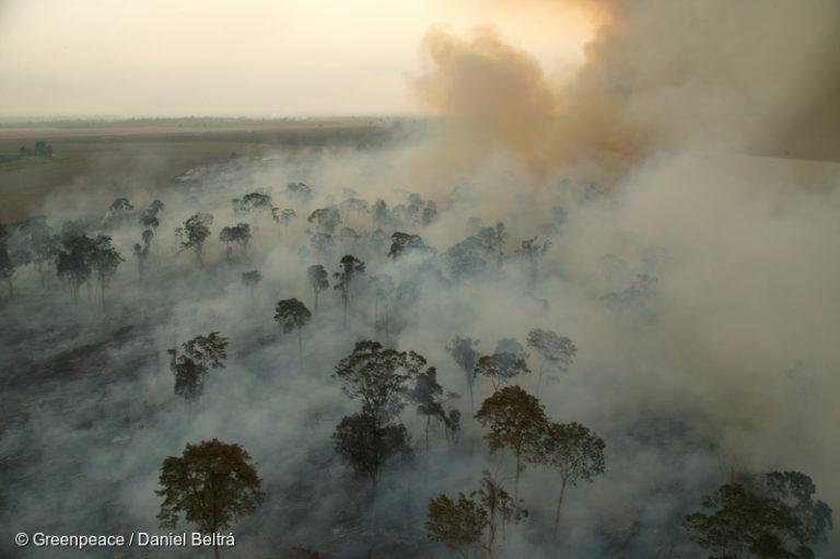 La empresa estadounidense Cargill quema grandes áreas de la selva amazónica en el norte del estado de Pará para prepararse para las plantaciones de soja en 2003. Imagen © Daniel Beltrá / Greenpeace