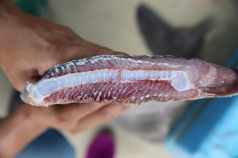 Desde noviembre del 2018 se han incautado 5800 kilos de aletas de tiburón que tenían como destino China, comentó la coordinadora de las FEMA en el Perú, Flor de María Vega. También se confiscó recientemente un cargamento de cinco toneladas de caballitos de mar. Foto: Oceana.