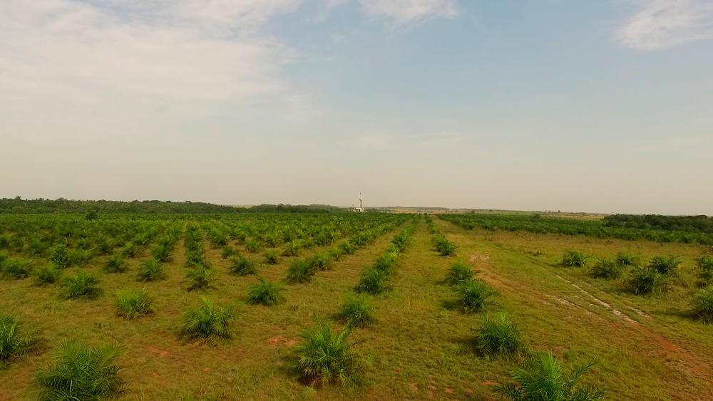 3500 hectáreas de palma se abastecen del río Tillavá. Foto: Álvaro Avendaño.