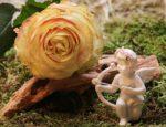 rose-2042268_960_720