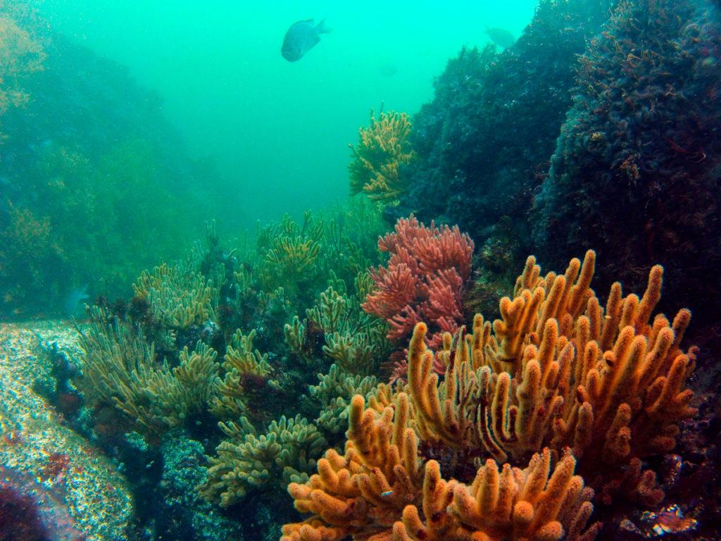 La biodiversidad más abundante en este espacio es la que existe bajo el mar. En los Arrecifes de Punta Sal se registra un alto endemismo de especies invertebradas.