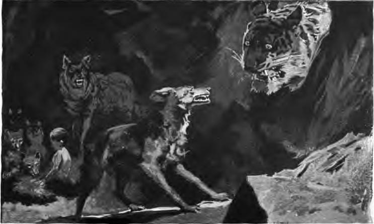 Una ilustración del Libro de la Selva original de Rudyard Kipling que muestra a Shere Khan enfrentándose a los lobos sobre Mowgli (visto al fondo). Ilustración de su padre, John Lockwood Kipling.