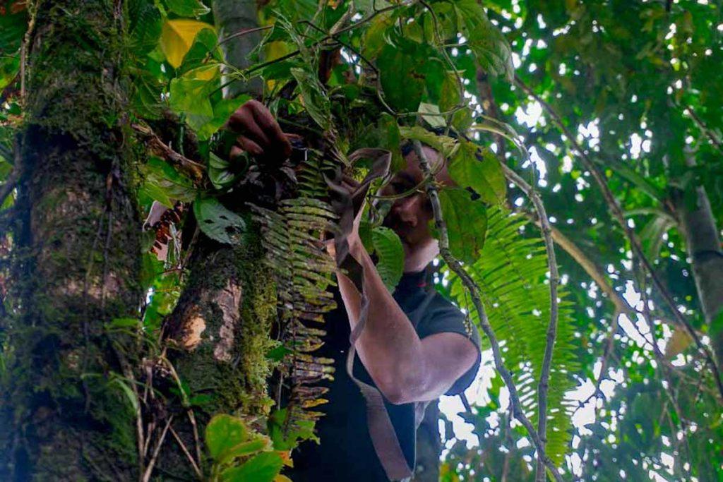 Las cámaras trampa se activan cuando detectan movimiento. Con ella los guardianes han logrado capturar desde mineros ilegales hasta pumas. Foto: Diego Ayala León.