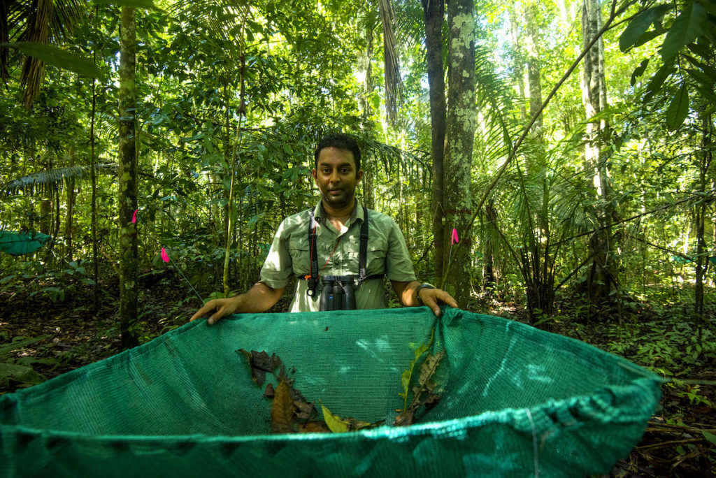 Varun Swamy muestra una de las trampas que han colocado en medio del bosque para poder atrapar las semillas. Foto: ©Gabriel Herrera.