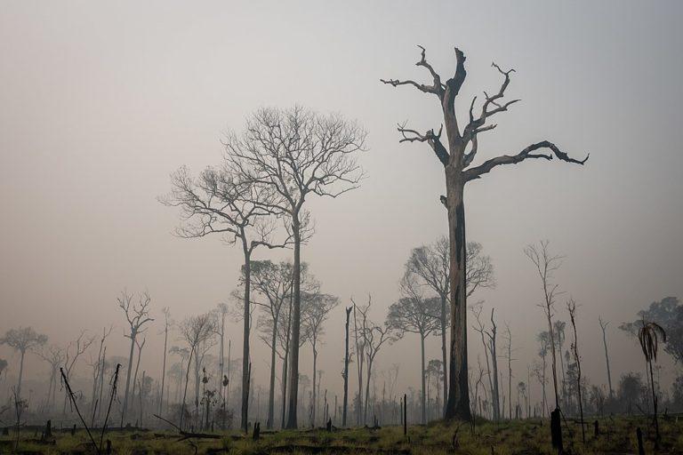 Deforestación producida por leñadores ilegales en el bosque nacional Jamanxim en el estado de Pará, Brasil. Imagen cortesía de IBAMA.