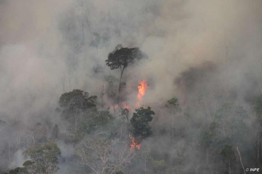 Los incendios están destruyendo los bosques pre-amazónicos. Crédito de la imagen: © INPE.