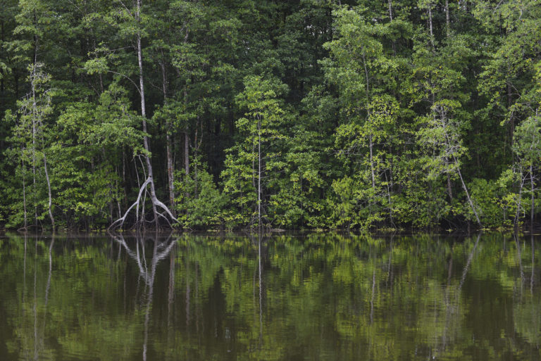 Reducir la deforestación es una tarea primordial en la lucha contra el cambio climático. Foto: Nina Cordero.