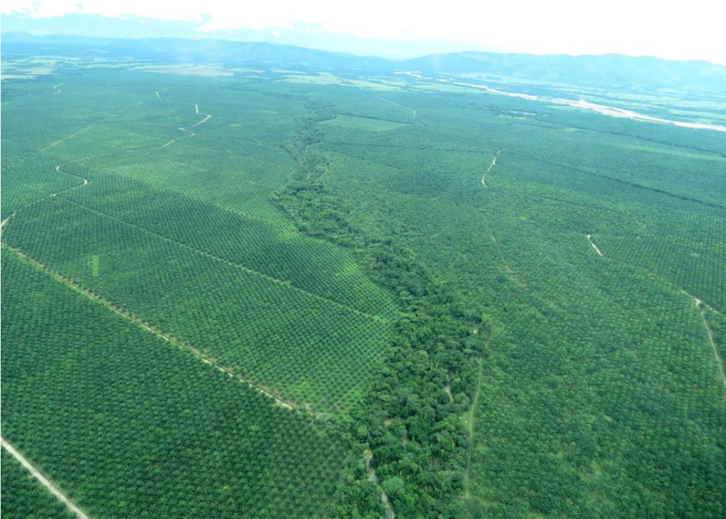 Vista aérea de una plantación monocultivo de palma aceitera en Colombia. Imagen cortesía de Lain Pardo.