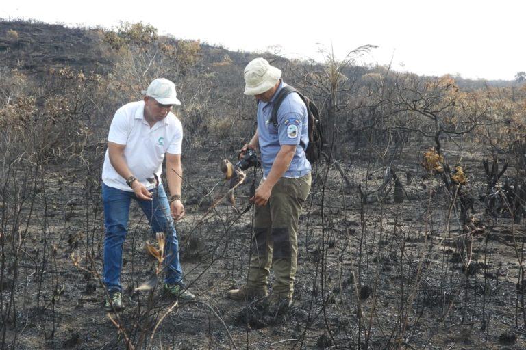 Funcionarios de Cormacarena inspeccionan los sitios de los incendios para evaluar el daño ambiental. Foto: Cormacarena.