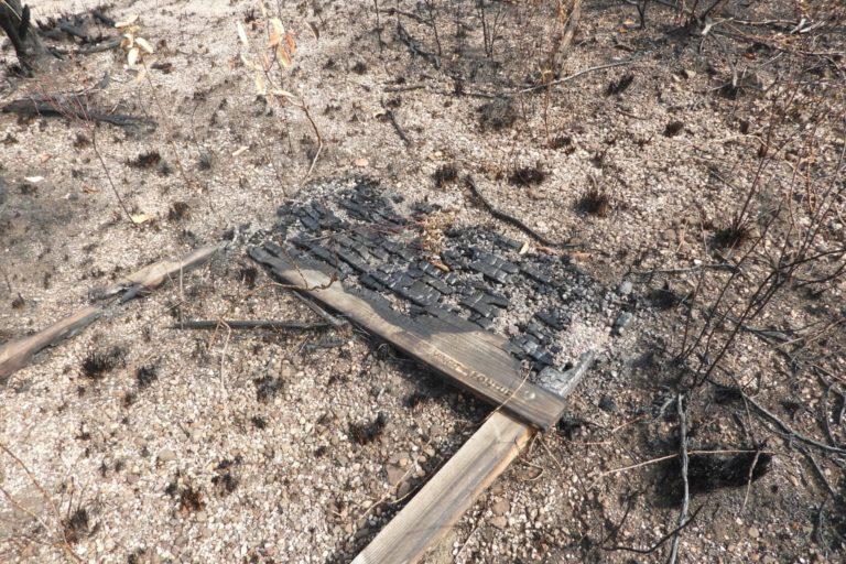 Se necesitarían al menos 20 años para que la zona incendiada se recupere. Foto: Cormacarena.