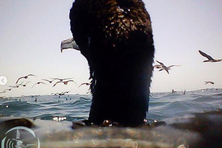 Aves marinas del proyecto Aves Marinas Como Centinelas del Mar. Foto: Unidad de investigación de ecosistemas marinos – Grupo aves marinas de la Universidad Científica del Sur.