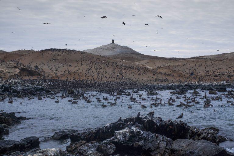 Paisaje de la isla Lobos Afuera en el Perú. Foto: Antonio Escalante.