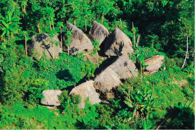 Las consecuencias de la presencia del coronavirus en pueblos indígenas en aislamiento voluntario sería devastadora. Foto: FUNAI.