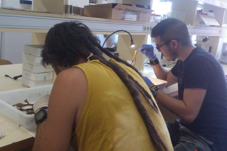 Científicos estudiando el brioso marino en el laboratorio. Foto: Blanca Figuerola (UB-IRBio)