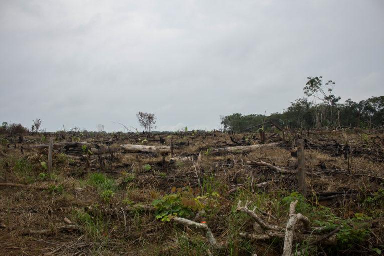 Deforestación en el parque Cordillera de los Picachos en Colombia. Foto: Rutas del Conflicto.