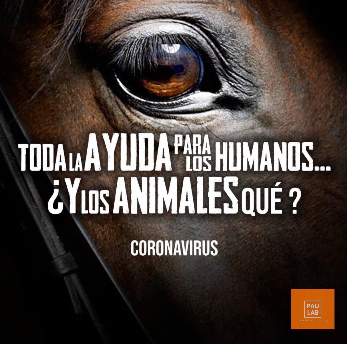 Coronavirus: Toda la ayuda para los humanos... ¿Y los animales qué?