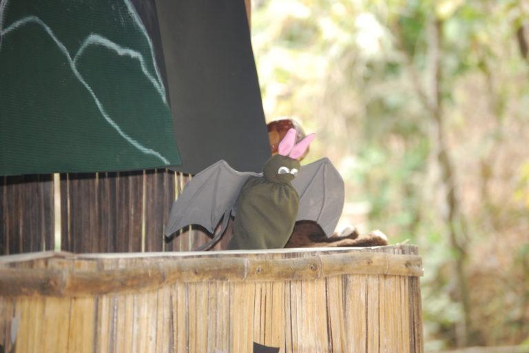Feria de murciélagos en el Bosque Protector Cerro Blanco, Guayas. Foto: Santiago Burneo.