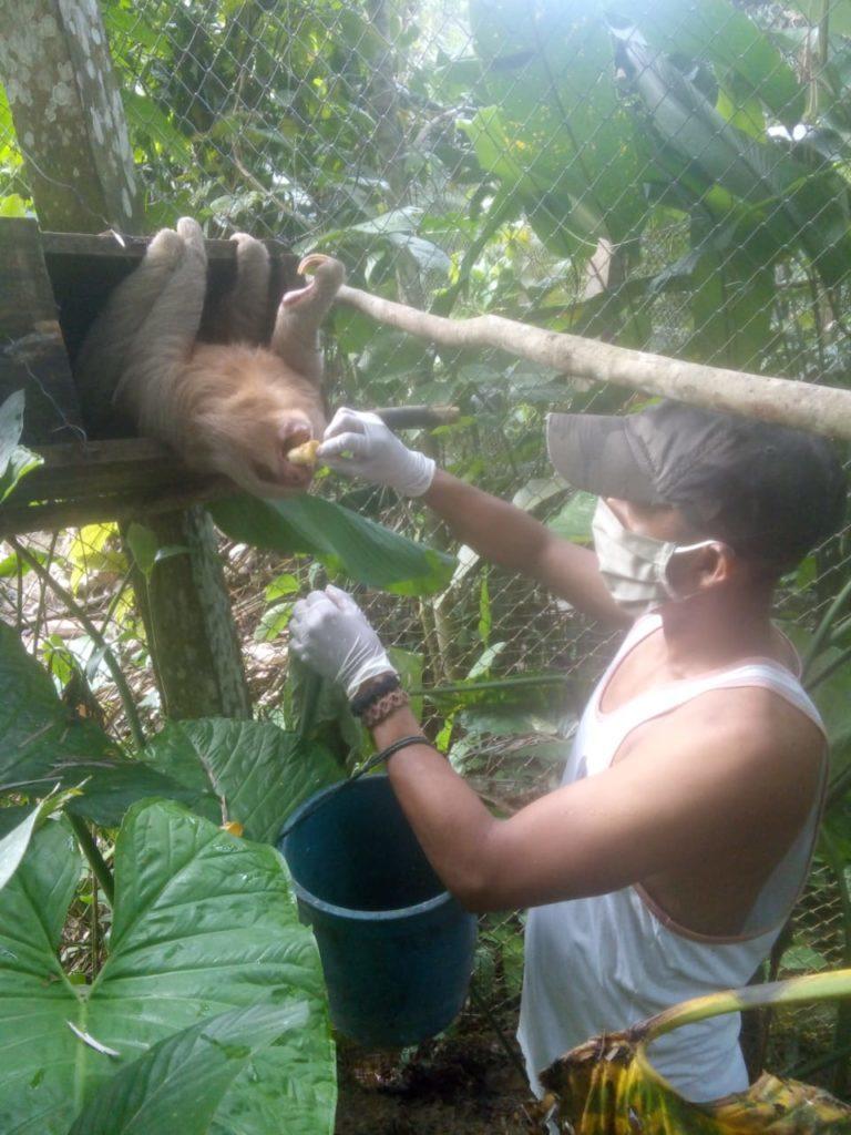 Los trabajadores de Pilpintuwasi, centro de rescate situado cerca de Iquitos, alimentan a los animales provistos de mascarillas por la cuarentena. Foto: Pilpintuwasi