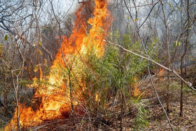 Incendio forestal en Bolivia. Foto: Fundación para la Conservación del Bosque Chiquitano.