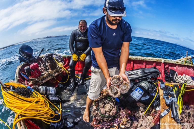 Pescadores artesanales de la Higuera, Chile, cosechando locos. Foto: Oceana – Eduardo Sorensen