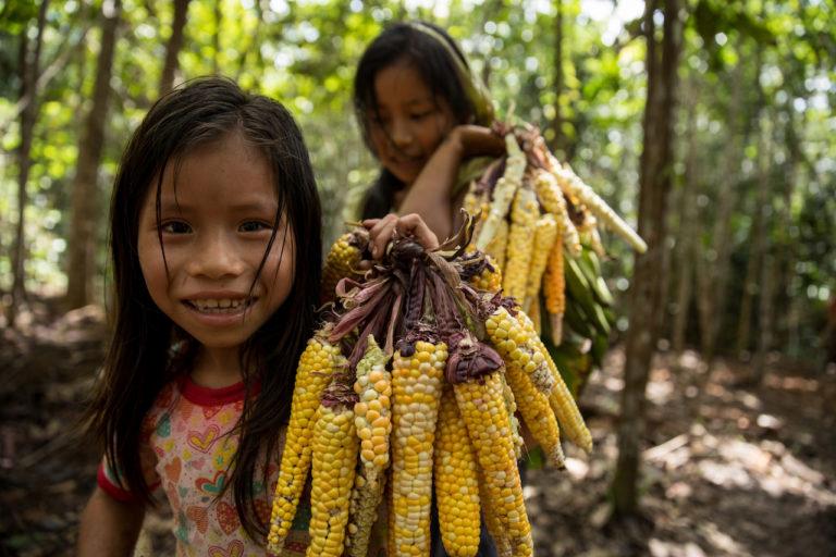 Las niñas matsés ayudan en las labores de la comunidad. Foto: Tui Anandi y Mike van Kruchten / Xapiri.