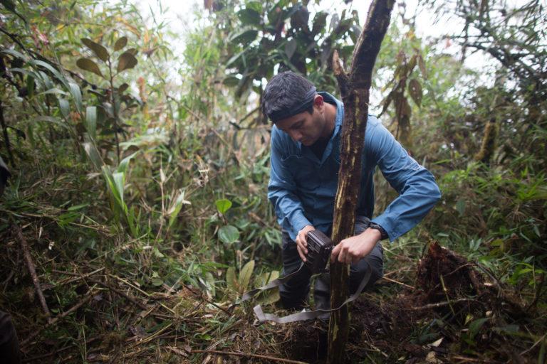 José Luis Mena cree que las cámaras trampa podrían ser una herramienta de contagio del coronavirus. Foto: WWF.