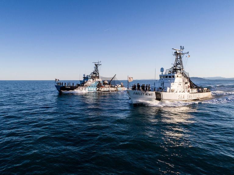 Dos de los barcos de Sea Shepherd que patrullan el refugio de vaquitas marinas. Foto de Sea Shepherd.