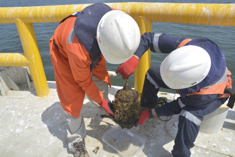 Trabajo de investigación en océanos. Foto: BMAP/CCS-SCBI.