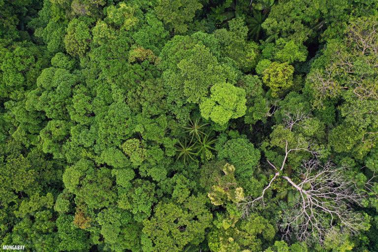 Amazonía colombiana. Foto: Rhett A. Butler.