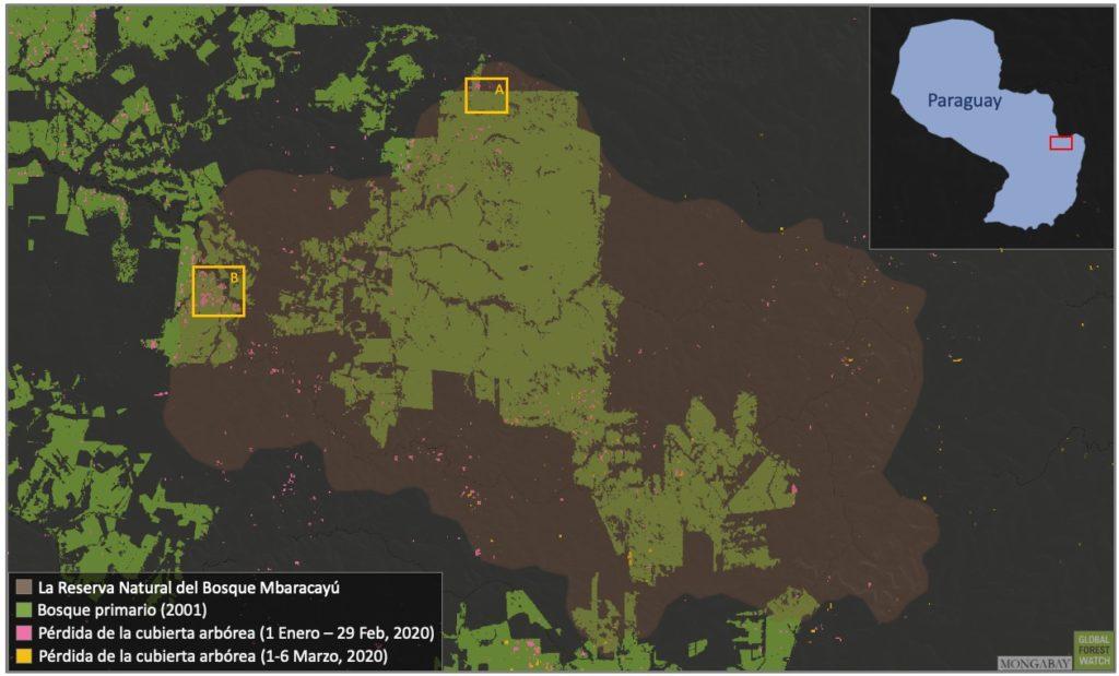 Mapa satelital del Parque Mbaracayú con focos de sus áreas deforestadas. Global Forest Watch