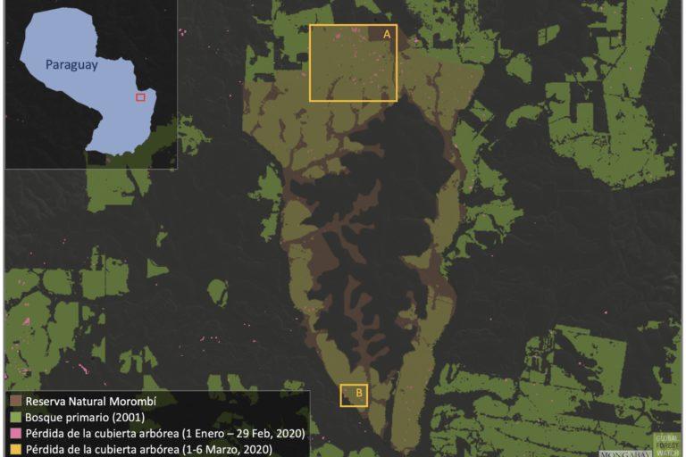 Mapa satelital de la Reserva Morombi con focos de sus áreas deforestadas. Global Forest Watch
