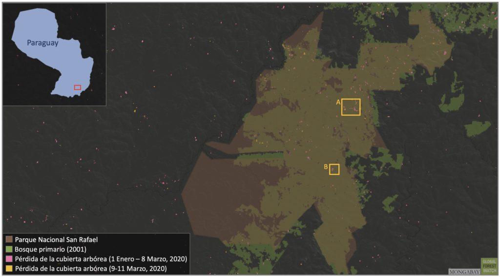 Mapa satelital de la Reserva San Rafael con focos de deforestación. Global Forest Watch