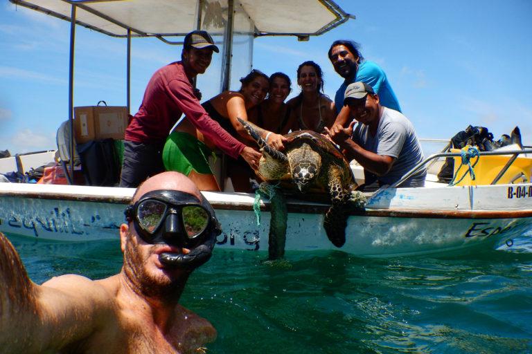 La tortuga carey está en peligro pues su caparazón es muy apetecido para artesanías.Foto: Equilibrio Azul/ @equilibrioazul
