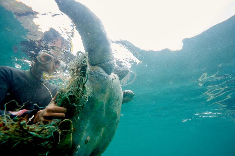 Los investigadores ayudan a tortugas que quedan atrapadas en redes. Foto: Equilibrio Azul/ @equilibrioazul
