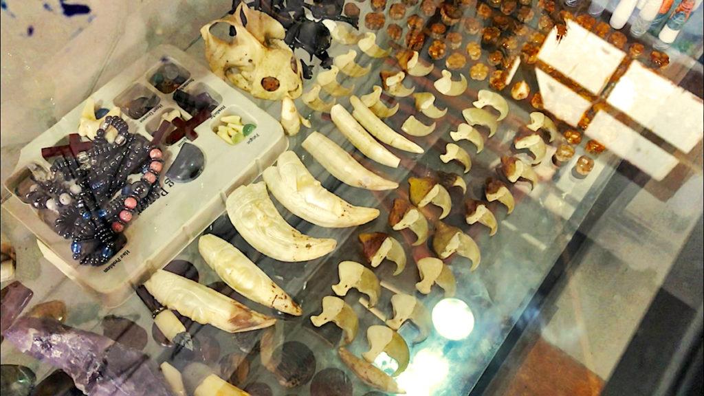 En las tiendas de artesanías de Iquitos, se están comercializando colmillos, cráneos y garras de jaguar, además de otros derivados de la fauna silvestre. Varios vendedores ofrecen los colmillos a escondidas para evitar los controles de las autoridades. Foto: Eduardo Franco Berton.