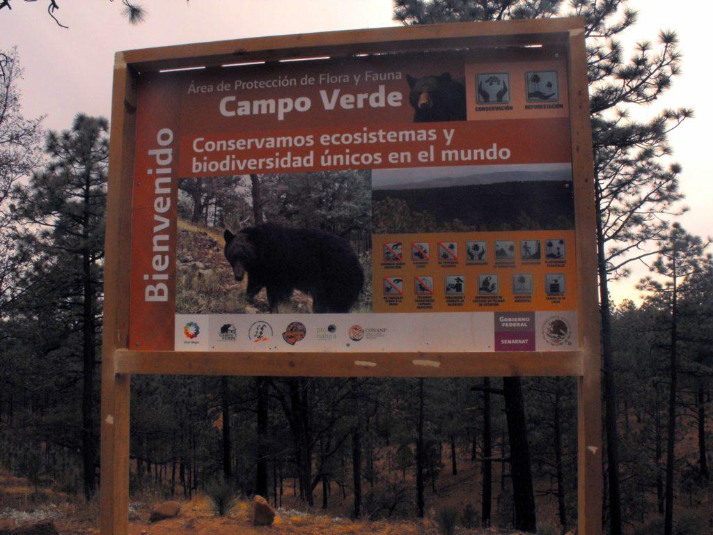 El oso negro es una de las especies que se protegen en la reserva de Campo Verde. Foto: APFF Campo Verde/CONANP