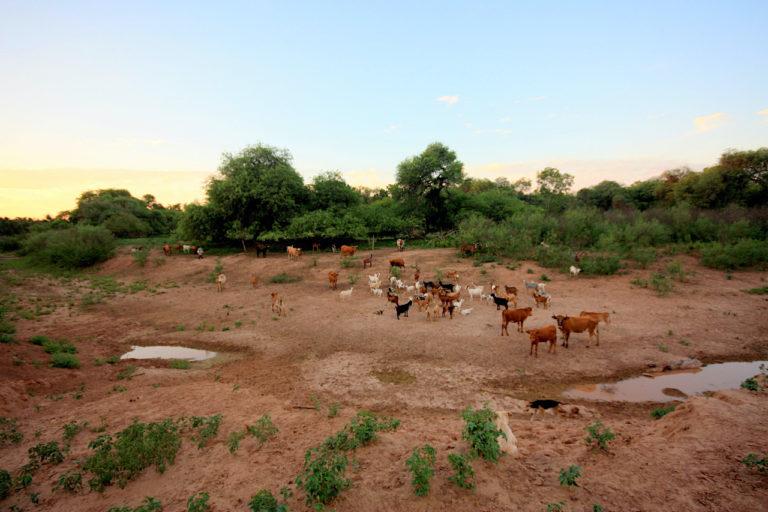 Solo algunos charcos calman la sed de vacas y cabras en las cercanías del río Bermejito. Foto: Ricardo Tiddi.