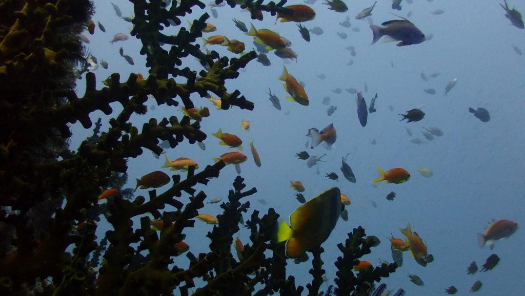 La colaboración, clave para reconstruir arrecifes